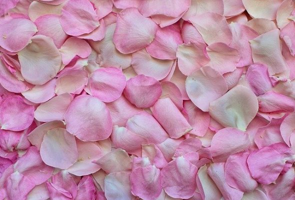 The importance of pink and other colors in psychology