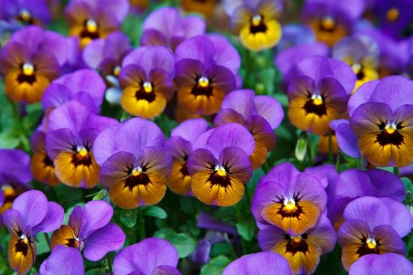 What does it mean in psychology if a person loves purple?